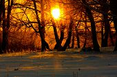 stock photo of birchwood  - The bright red sun ascends over a birchwood in the winter - JPG