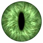 stock photo of animal anatomy  - Illustration of a green round animal iris - JPG