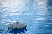 image of white lily  - An artificial water lily floating on blue water - JPG