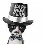 Cute black and white kitten with moustache, bow tie and Happy New Year hat.