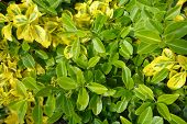 image of clos  - a mixture of green and yellow leaves taken clos up - JPG