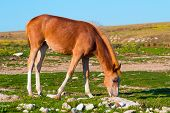 Young Horse Farm Animal Pastured On Green Valley Eating Fresh Grass Rural Landscape