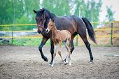 stock photo of mare foal  - The two - JPG