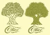 foto of olive trees  - vector pattern with an olive tree for packaging - JPG