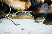 foto of mollusca  - Background image of branch or wood stick on the white sand  - JPG