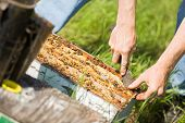 pic of bee keeping  - Cropped image of beekeeper removing honeycomb frames from crate at apiary - JPG