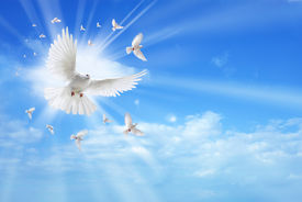 stock photo of baptism  - White dove in a blue sky symbol of faith - JPG
