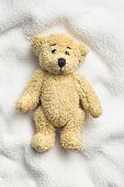 picture of teddy  - teddy bear on white pillow - JPG
