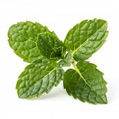 image of mint leaf  - Fresh mint herb leaves isolated on white background cutout - JPG