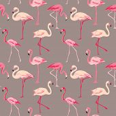 stock photo of zoo  - Flamingo Bird Background  - JPG