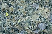 pic of lichenes  - Stone covered with lichen - JPG