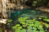 stock photo of cenote  - X - JPG