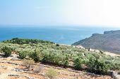 image of greek-island  - Olive trees plantation and Mediterranean villa on Greek Kalymnos island - JPG
