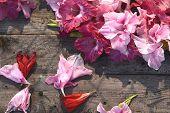 foto of gladiolus  - Lovely blooming gladiolus flowers on rustic wooden planks - JPG