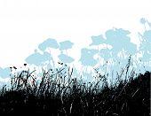stock photo of white flower  - Black grass with light blue poppy flowers - JPG