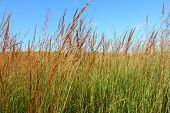 stock photo of tallgrass  - A vast prairie at Nachusa Grasslands of northern Illinois - JPG