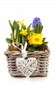 Basket Spring Flowers