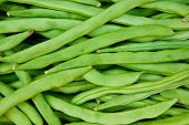 picture of phaseolus  - Green beans  - JPG