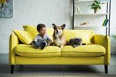 Adorable Boy With Welsh Corgi Dog And Scottish Fold Cat Sitting On Yellow Sofa At Home poster