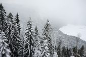 Scenic View With Pine Forest Of The Bavarian Alps In Winter. Snowy Day In The Mountains. Bavaria, Ge poster
