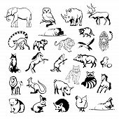 Animals Logo, Dangerous Carnivores, Various Animals For Your Logo, Set Of Different Domestic And Wil poster
