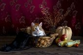 Halloween Concept. Still Life With Pumpkin, Apples And Cat In A Wicker Basket On Wooden Background C poster