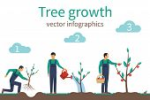 Process Of Growth Of Tree From Planting To Fruit Ripening. Timeline Infographic Growth Tree. Horticu poster