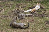 Stray Cats Relax And Play On Green Grass. Homeless Cat Family On Summer Lawn. Green-eyed Brown Cat L poster