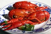 stock photo of craw  - Boiled Craw fish in a chinese resturant - JPG