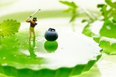 picture of miniature golf  - Miniature Figures playing golf on fruits - JPG