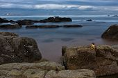 stock photo of crustations  - Crustation on rock overlooking ships on a rocky shore - JPG