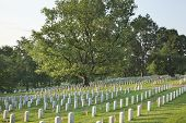 picture of arlington cemetery  - Gravestones with American flags below a beautiful tree in Arlington National Cemetery on Memorial Day - JPG