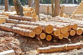 Harvested pine logs at the site of timber processing and assembly log cabins homes