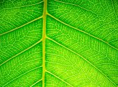 picture of peculiar  - Leaf surface - JPG