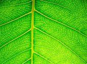 foto of peculiar  - Leaf surface - JPG