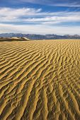 picture of mesquite  - Rippling golden sand of Mesquite Flat Dunes Death Valley - JPG