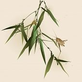 pic of bamboo leaves  - A grasshopper on bamboo leaves - JPG