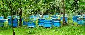 stock photo of honey bee hive  - Honey Bee Hives Between Trees In Summer Garden - JPG
