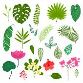 picture of jungle flowers  - Set of stylized tropical plants - JPG