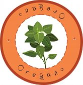 image of oregano  - Fresh Italian Oregano - JPG