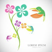 image of hummingbirds  - Vector design of hummingbird and flowers on white background - JPG