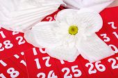 pic of menses  - Sanitary pads and white flower on red calendar background - JPG