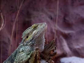 image of crocodilian  - Reptiles - JPG