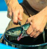 foto of animal cruelty  - Fishing  - JPG