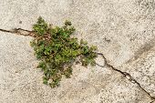 image of survival  - Small plant growing and survive from the crack concrete - JPG