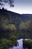 stock photo of vegetation  - bog of SEE D - JPG