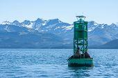 stock photo of sea lion  - Sea Lions in Alaska - JPG