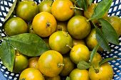 stock photo of clementine-orange  - Some fresh - JPG