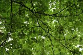 stock photo of foreshortening  - Tree branches - JPG