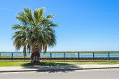 stock photo of faro  - Palm along the street and railways Faro Portugal